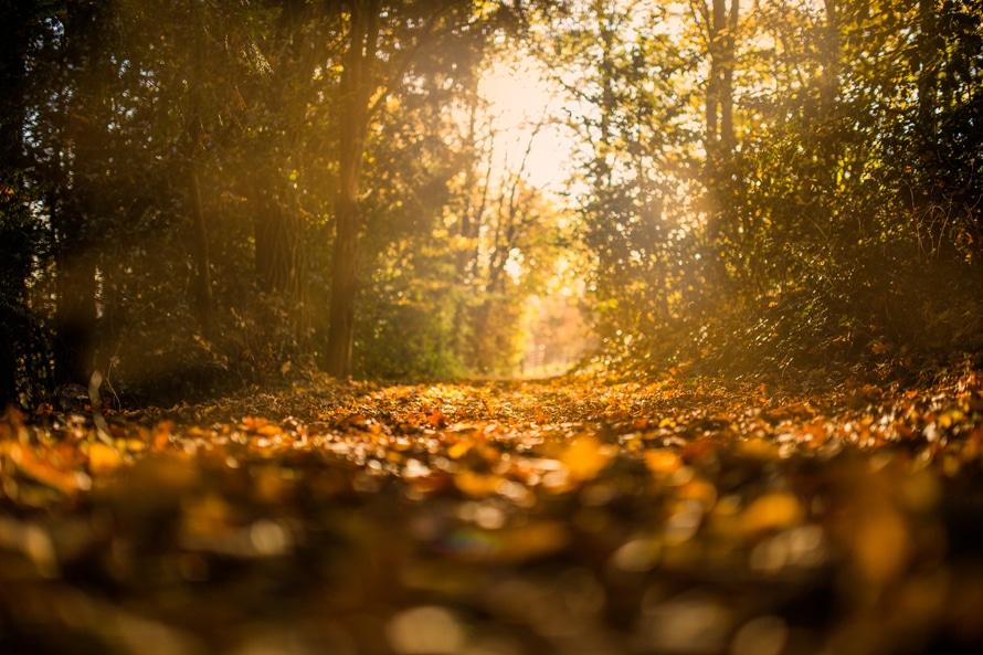 秋に心を強くするための5つの名言