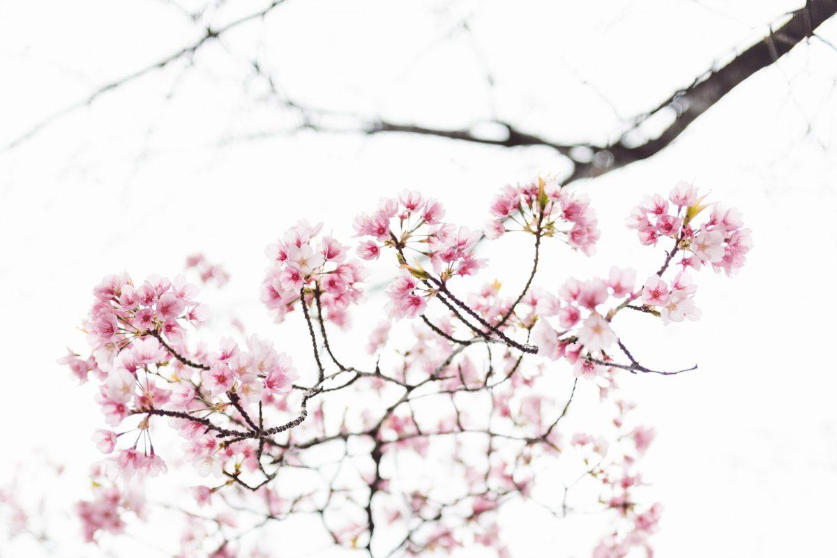 masaaki-komori-604389-unsplash